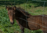 8-dsc_0276-pony-foal-in-lecompton-copy