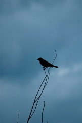 dsc_2283-silhouette-bird-on-branches-copy