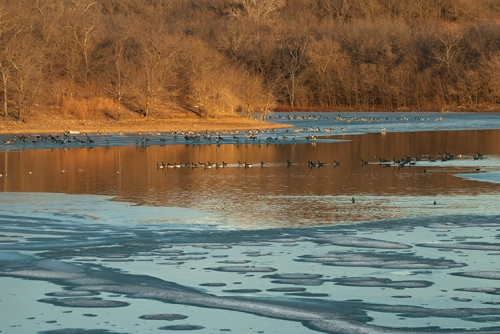 birds on perry lake ice