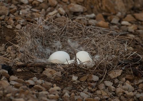 DSC_1222 4 eggs - 1 duck egg among them small